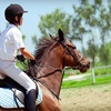Up to 56% Off Horseback-Riding Lessons