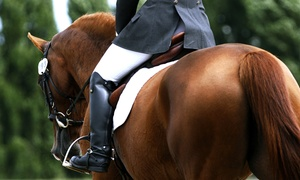 Sterling Shields Stables and Riding Academy: Horse Riding Lessons at Sterling Shields Stables and Riding Academy in Westfield (Up to 55% Off). Three Options.