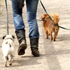 Up to 51% Off Dog Daycare and Boarding