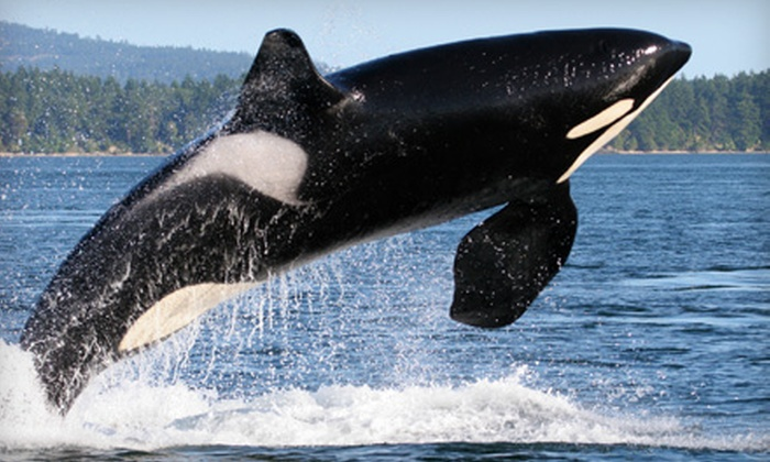 Orcas Outdoors - Seattle: Three-Hour Whale-Watching Kayak Tour or Two-Day Overnight Island Adventure from Orcas Outdoors (Up to 58% Off)