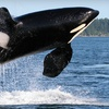 Whale-Watching Kayak Tour or Overnight Island Adventure
