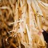 52% Off Autumn Festivities in Lehi
