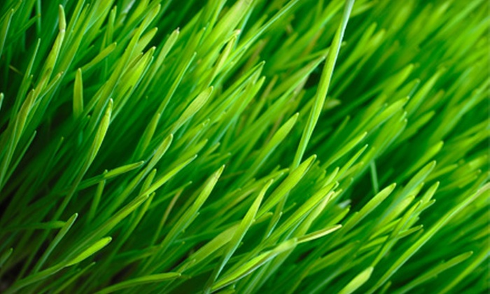 Green Unlimited - Byward Market - Parliament Hill: $19 for a Fall Lawn Fertilization from Green Unlimited ($61.84 Value)
