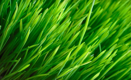 Green Unlimited - Green Unlimited in