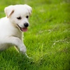 Up to 58% Off Pet Grooming in North Providence