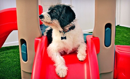 Two Doggie Daycare Sessions (a $60 value) - You Luckie Dog! Doggie Daycare Resort & Spa in Milpitas