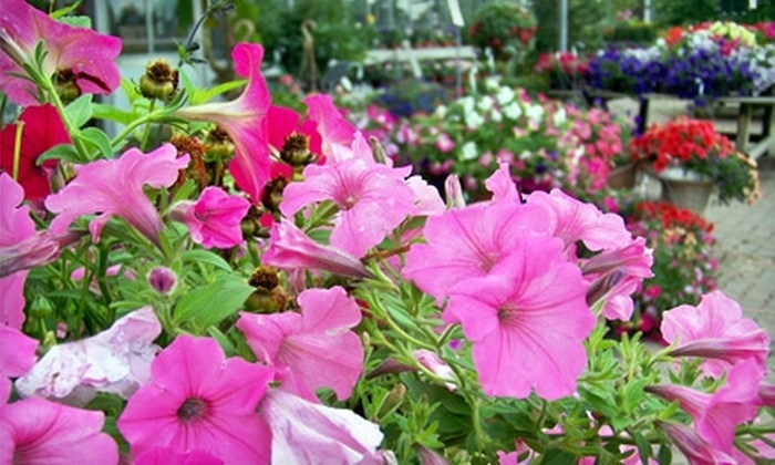 Buchwalter Greenhouse - Wooster: $12 for $25 Worth of Plants and Garden Supplies at Buchwalter Greenhouse in Wooster