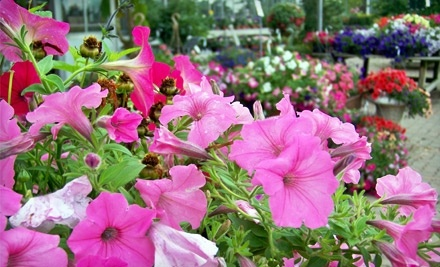 $25 Groupon to Buchwalter Greenhouse - Buchwalter Greenhouse in Wooster