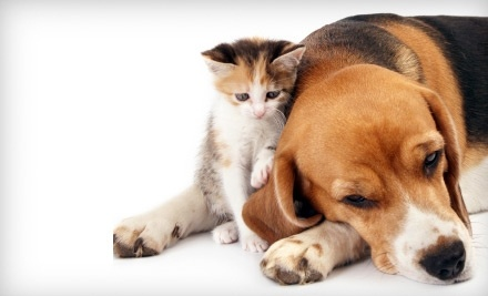 Animal Care Center - Animal Care Center in Metairie