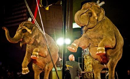 Circus Gatti on Fri., Feb. 24 at 4:15PM: Family Pass (General Admission Seating) - Circus Gatti in Abilene