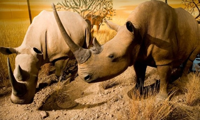 International Wildlife Museum - Tucson: $22 for a Family Membership or $8 for Two Admissions to the International Wildlife Museum