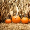 Up to 44% Off Corn Maze Admission at Brookfield Pumpkins