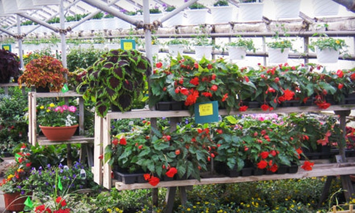 Kircher's Flowers - Multiple Locations: Plants and Accessories at Kircher's Flowers (Half Off)
