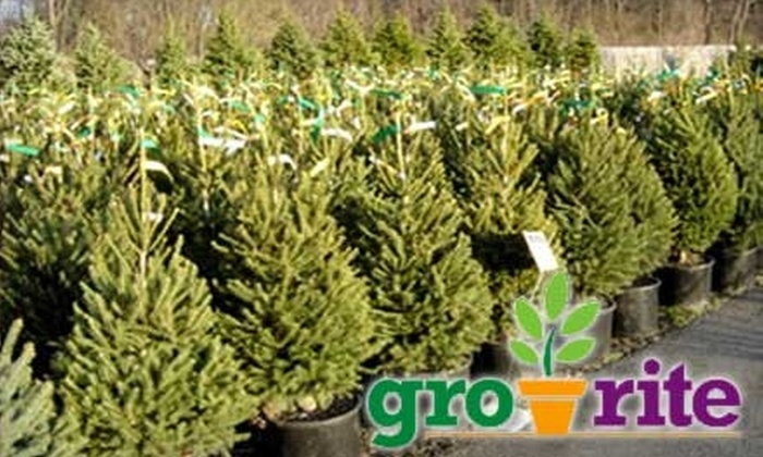 Gro-Rite - Pequannock: $20 for $40 Worth of Holiday Decorations, Plants, and Garden Accessories at Gro-Rite Greenhouse & Garden Center
