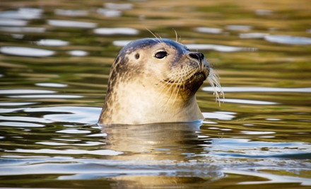 One Ticket to a Seal-and-Bird-Watching Tour (a $27 value) - American Princess Cruises in Breezy Point