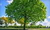 Atlas Landscaping - Lansing: One or Three Lawn-Mowing Services or Tree-Trimming and Removal Services from Atlas Landscaping, LLC (Up to 67% Off)