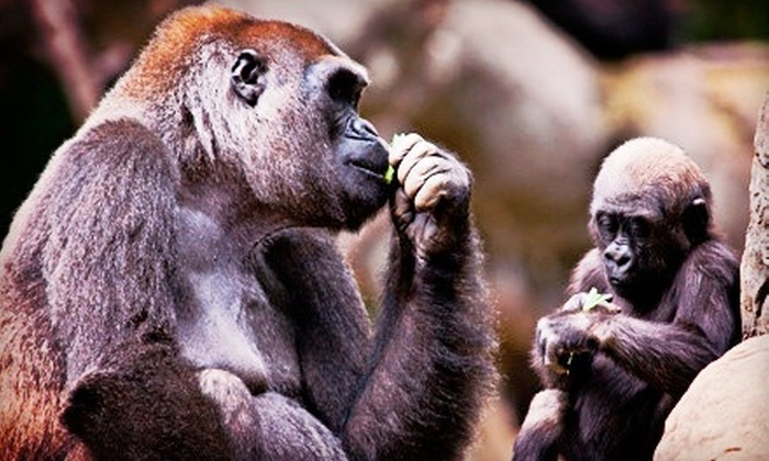 Zoo Atlanta - Eastside: $20 for a Visit to Zoo Atlanta for Two (Up to $43.98 Value)