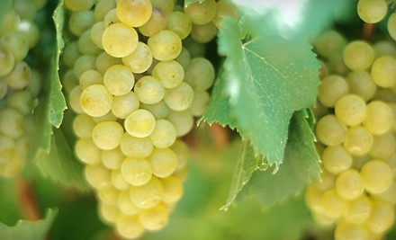 Wilhelm Family Vineyards - Wilhelm Family Vineyards in Sonoita