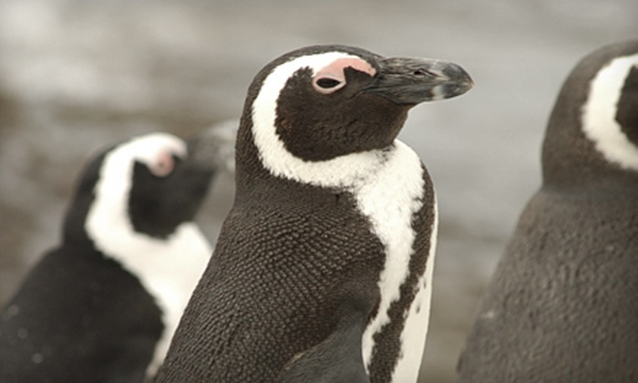 Turtle Back Zoo: $50 for an Adopt-a-Penguin Package from Turtle Back Zoo ($100 Value)