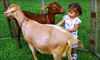 The Little Farm - Princeton-Goulds: $10 for a Farm Visit for Two at The Little Farm ($20 Value)