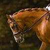 3 lezioni di equitazione e 2 escursioni