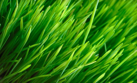 Early Spring Fertilization Package for a Quarter Acre or 10,000 Square Feet (a $91 value) - NaturaLawn of America in