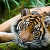 Woodland Park Zoo – $8 for One Adult Admission