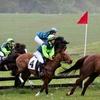 Half Off Junior Horse Event in Cockeysville
