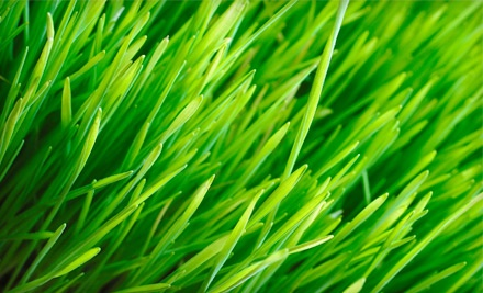 Up to 6,000 Square Feet of Lawn Aeration and Seeding (up to a $180 value) - ServiceProz Inc. in