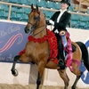 Up to 55% Off Riding Lessons at John White Stables