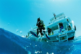 Gulf Coast Divers: Open-Water Scuba-Diving Certification at Gulf Coast Divers (50% Off)