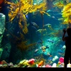 Shaw Ocean Discovery Centre – Up to 55% Off Entry