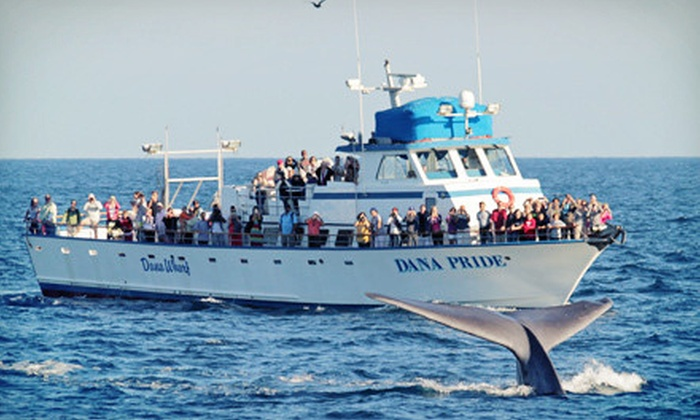 Dana Wharf Whale Watching - Dana Point: Gray-Whale-Watching Tour for Adult, or Tour with Book for Child from Dana Wharf Whale Watching (Up to 61% Off)