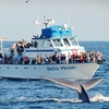 Up to 61% Off Whale-Watching Tour