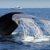 Up to Half Off Whale Watching Cruise in Dana Point