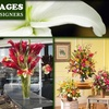 51% Off at Tropical Images