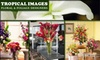 Tropical Images Floral & Folliage Designers - Druid Hills South: $37 for $75 Worth of Flowers, Balloons, and Gifts at Tropical Images