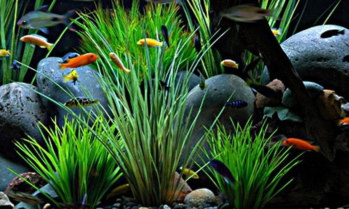 Fish Gallery - Dallas: $10 for $25 Worth of Fish, Accessories, and More from Fish Gallery