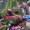 Half Off at The Urban Gardener
