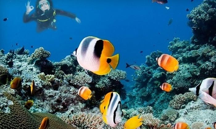 Sea Level Scuba - Melbourne: $37 for a Discover Scuba Diving Class at Sea Level Scuba in Melbourne ($75 Value)