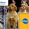 Dennehy PR for Bay Colony Dog Show - Boston: $6 Tickets to The Bay Colony Dog Show on Thursday, December 3, or Friday, December 4 ($12 Value)