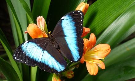 Leidschendam: toegang voor 2 personen tot de tropische vlinderjungle Vlinders aan de Vliet