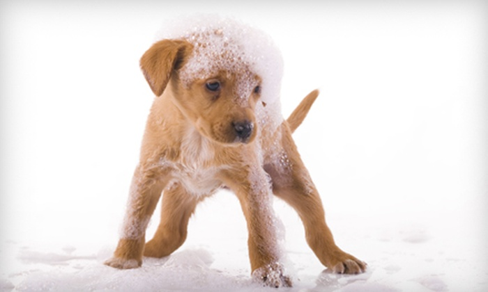 Champs Pet Grooming - South Wichita: Canine Deluxe Grooming Package for a Small, Medium, or Large Dog at Champs Pet Grooming in Haysville