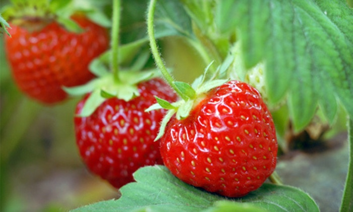 Hoffman Farm Store - Beaverton-Hillsboro: $10 for $20 Worth of Pick-Your-Own Berries at Hoffman Farms Store in Beaverton