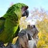 Tracy Aviary – Up to 60% Off Adopt-A-Bird Program