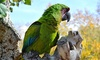 The Tracy Aviary - Salt Lake City: Adopt-A-Bird Package with Four Guest Passes and Optional Family Membership at Tracy Aviary (Up to 60% Off)