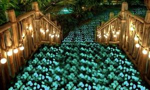 1 ou 2 lots de 100 pierres fluorescentes