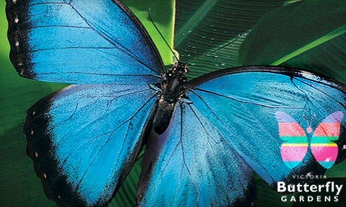 Victoria Butterfly Gardens - Brentwood Bay: $8 for One Adult Admission at Victoria Butterfly Gardens ($16.80 Value)