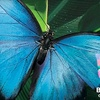 Half Off Admission at Victoria Butterfly Gardens