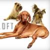 51% Off Pet Services at K9 Loft